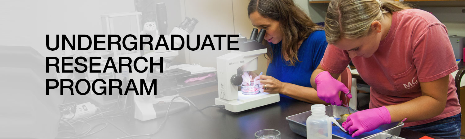 Undergraduate Research Program | Student looking in microscope