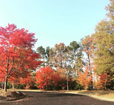 Commuter Parking lot showing Fall Foilage