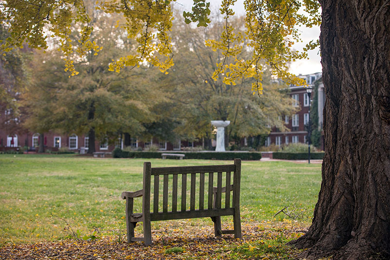 Bench underneath an Oak Tree in the Campus Quad