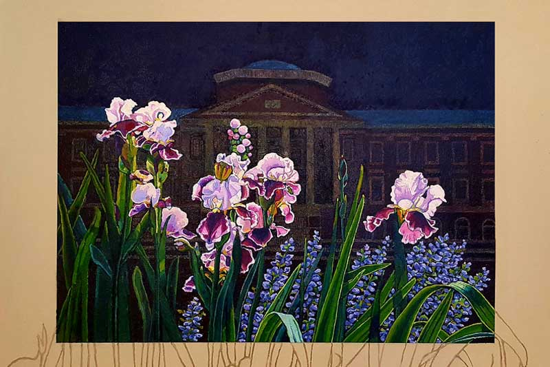Painting of the Meredith Hues irises in front of Johnson Hall