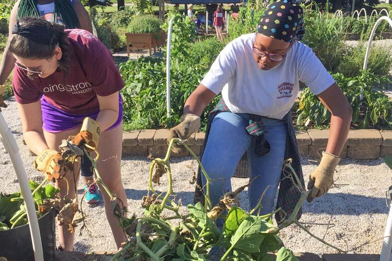 Service Scholars planting a garden