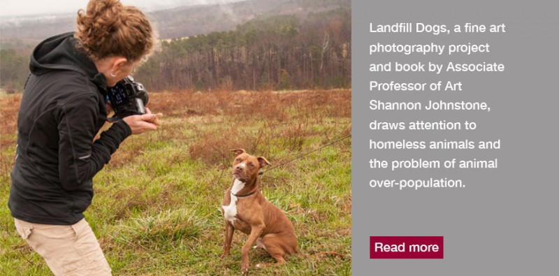 Landfill Dogs Story