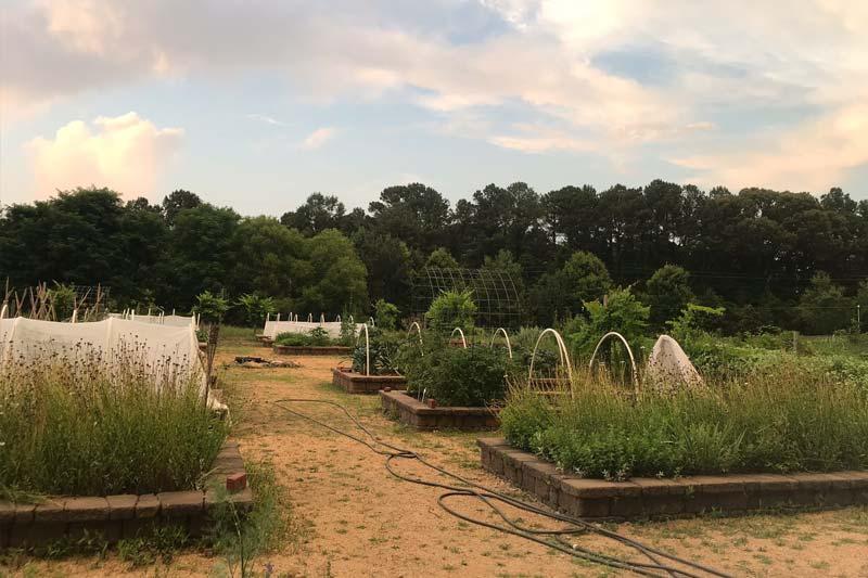 Dickson Foundation Community Garden