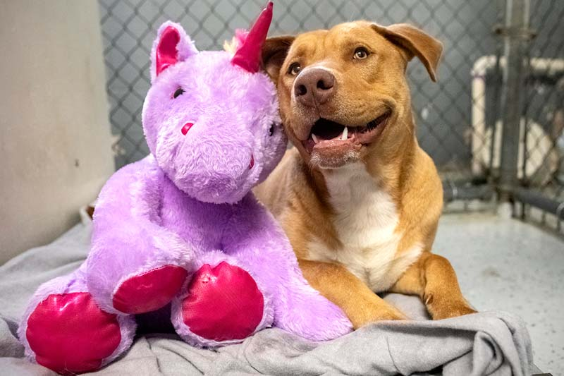Siska the dog smiling with a Unicorn stuffed animal